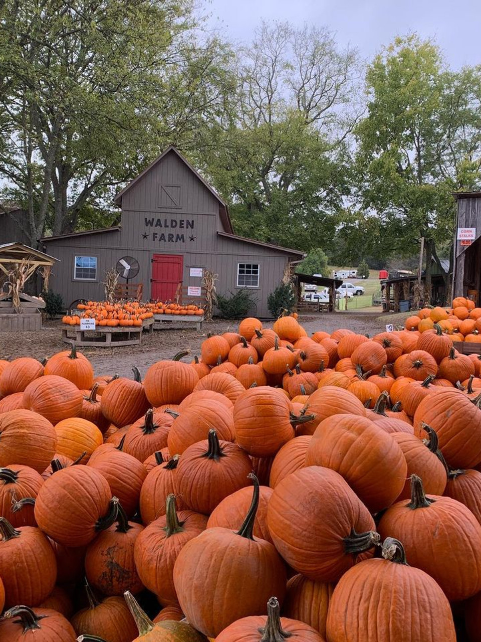 On The Farm: These Middle Tennessee pumpkin patches are the perfect Fall  getaway | WZTV
