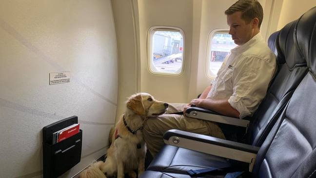 Methodist Hospital sending therapy dogs to visit El Paso shooting