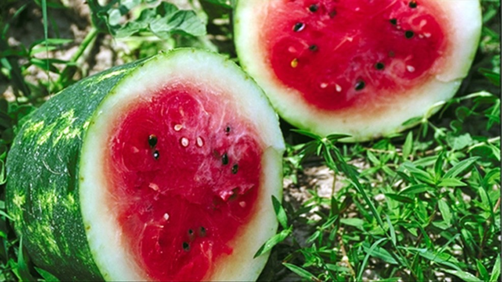 Tennessee added to pre-cut watermelon, honeydew, cantaloupe