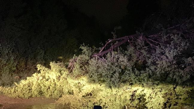 Possible damage from straight-line winds in Spring Hill | WZTV